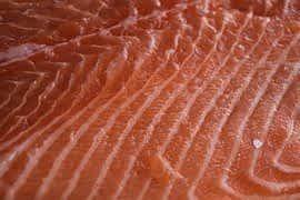 salmon closeup