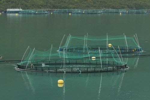 Fish_farming_in_Torskefjorden,_Senja,_Troms,_Norway,_500px