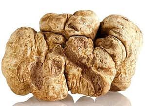 Rational Kitchen 2019 Ultimate Gift Guide truffle mushroom